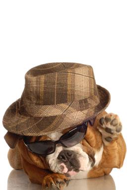 Dog Boarding Florida : Dog Hotel, Dog Training, Dog Spa in Boca